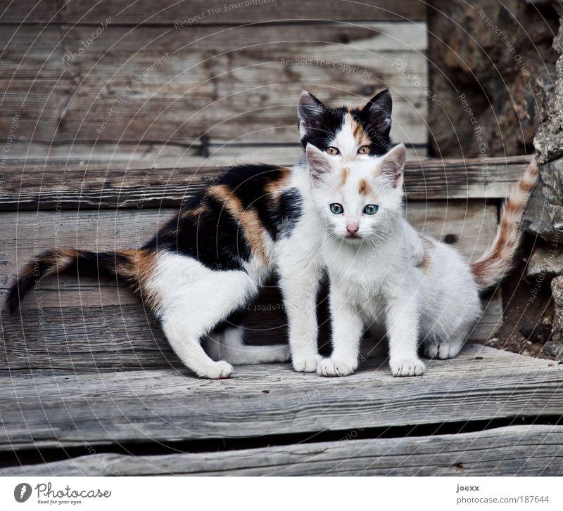 Schützlinge Haustier Katze 2 Tier Tierjunges Blick Spielen klein Neugier braun weiß Erwartung Kindheit Katzenbaby Holztreppe Treppe schön Wachsamkeit Farbfoto