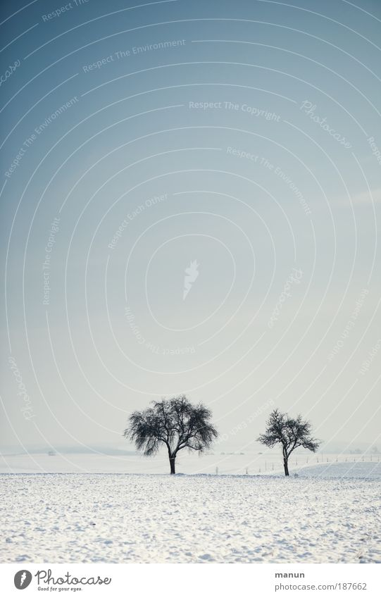 Wintermorgen Natur Himmel weiß Baum blau ruhig Ferne kalt Schnee Erholung Wiese Landschaft Eis Feste & Feiern Feld