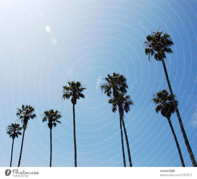 Palm Beach. Ferien & Urlaub & Reisen Sommer Meer Erholung Landschaft Ferne Freiheit Luft Freizeit & Hobby Tourismus ästhetisch Schönes Wetter Symbole & Metaphern heiß Paradies Fernweh