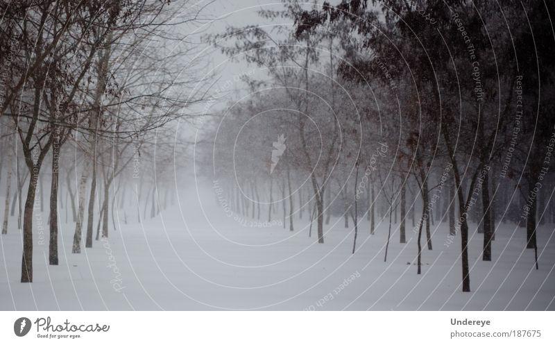 Natur weiß Baum Pflanze Winter kalt Schnee grau Stimmung Park Eis Horizont Klima Frost einfach Frieden