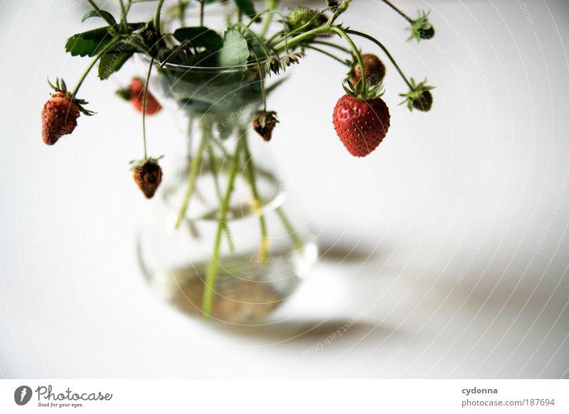 Erdbeeren Lebensmittel Frucht Ernährung Bioprodukte Natur Pflanze ästhetisch einzigartig elegant genießen Idee Lebensfreude nachhaltig schön Vergänglichkeit