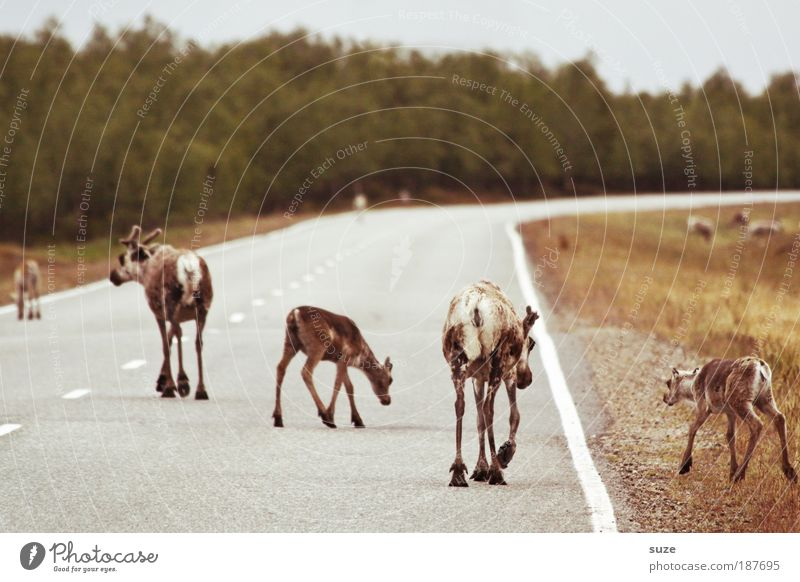 Osterspaziergang Ausflug Umwelt Natur Landschaft Pflanze Tier Wiese Wald Straßenverkehr Wege & Pfade Nutztier Wildtier Tiergruppe Herde Tierfamilie laufen