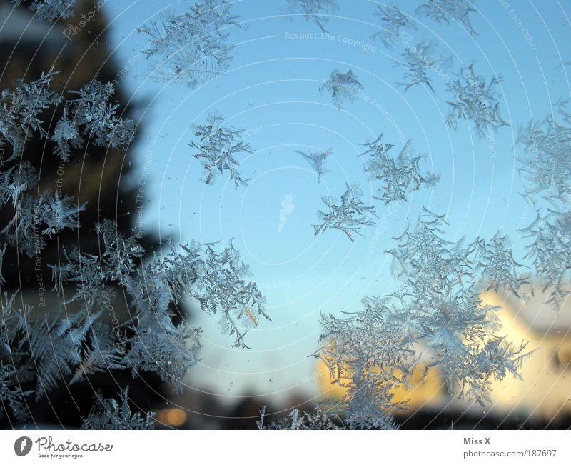 Eisblumen zum Geburtstag Häusliches Leben Winter Wetter Frost Garten Fenster Tür kalt Wasser Glasscheibe Minusgrade Farbfoto Außenaufnahme Nahaufnahme