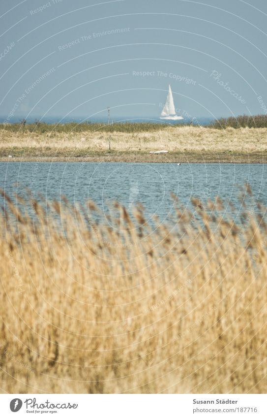 Kurs 2-9-9 Wasser Meer Sommer Strand Einsamkeit Ferne Bewegung Küste Luft Wellen Ausflug Insel Seeufer Ostsee Schifffahrt Schilfrohr