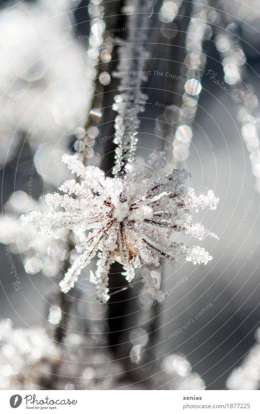 Eisblume Natur Wasser Winter Frost Schnee Pflanze Blume Blüte kalt weiß elegant filigran ice Raureif Eiskristall glitter snow frieren cold Eisblumen Farbfoto