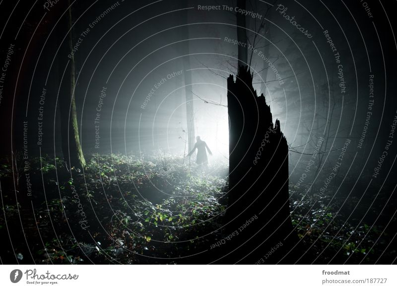 waldlichtung Mensch Nebel Einsamkeit dunkel kalt Zufriedenheit Angst Licht Pflanze Sträucher bedrohlich einzigartig fantastisch geheimnisvoll gruselig