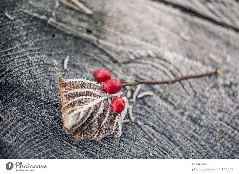 I seh a bissel rot Natur Stadt schön weiß Blatt Winter Wald Umwelt Schnee Stil grau braun Design glänzend Eis