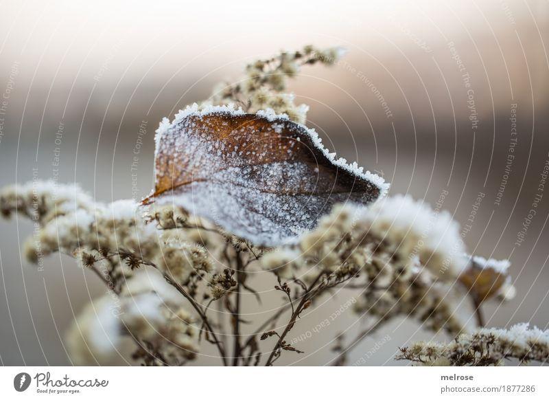 Väterchen FROST Natur Pflanze Stadt weiß Erholung Blatt Winter Wald Umwelt kalt Traurigkeit Stil braun glänzend Eis elegant