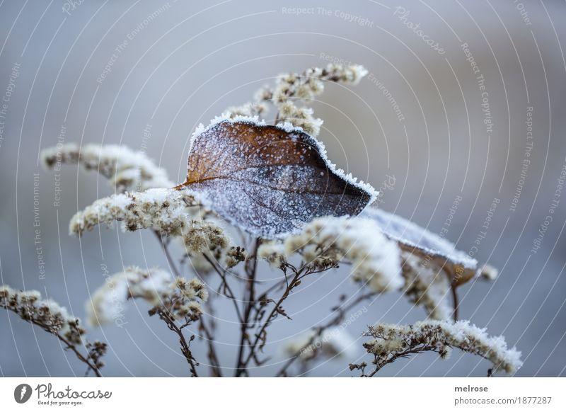 festgefroren Umwelt Natur Winter Eis Frost Pflanze Gras Sträucher Blatt Gräserblüte Wald Stillleben Eiskristall Rauhreif Väterchen Frost inmitten festhalten