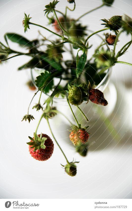 Erdbeeren I Natur schön Pflanze Leben Ernährung Lebensmittel Gesundheit Frucht elegant ästhetisch Wachstum Dekoration & Verzierung einzigartig Vergänglichkeit