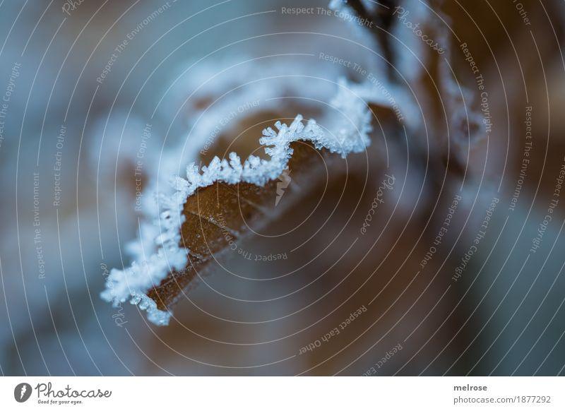 gezuckert III Natur Winter Klima Wetter Eis Frost Pflanze Blatt Blätter Zweige u. Äste Wald Eiskristall Väterchen Frost Raureif Schneekristall frieren