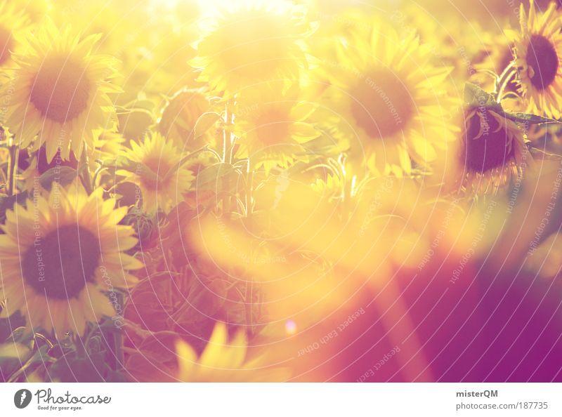 When it was summer. Natur Sonnenstrahlen Sonne Blume Sommer gelb Wiese Wärme Landschaft Feld Gegenlicht ästhetisch Zukunft Romantik Spaziergang Ernährung