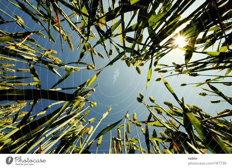 ich will SOMMER !!! Perspektive Natur Sonne grün blau Pflanze Sommer Gegenlicht Froschperspektive Erholung Licht Wärme Luft Zufriedenheit Kraft Feld