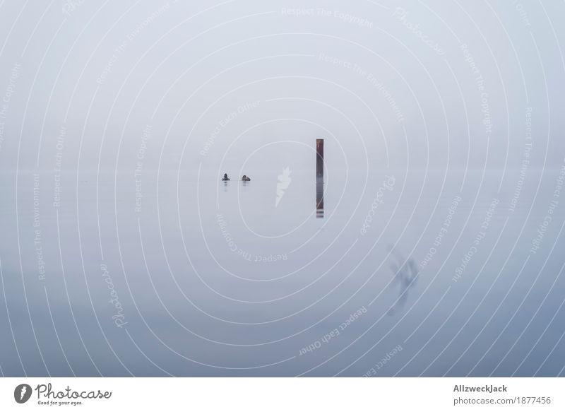 Ducks in the mist Landschaft Wasser Nebel 2 Tier gruselig kalt grau Einsamkeit ruhig Mole See Vogel minimalistisch Farbfoto Außenaufnahme Menschenleer Tag