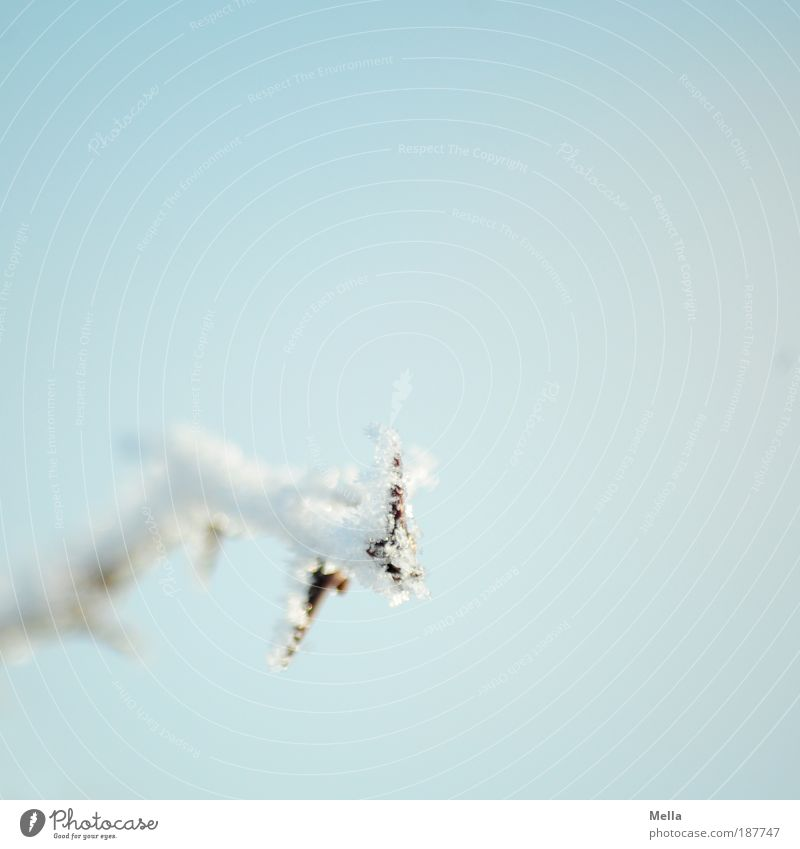Kalt war's Natur Himmel weiß blau Pflanze Winter ruhig kalt Eis hell Wetter Umwelt Frost Klima rein Idylle