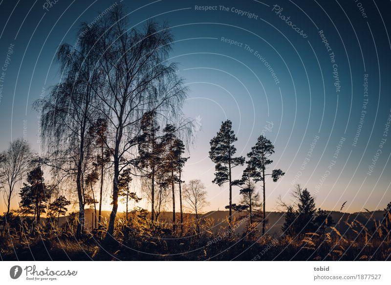 Abendstimmung Natur Landschaft Pflanze Himmel Wolkenloser Himmel Horizont Herbst Winter Schönes Wetter Baum Gras Sträucher Hügel frei Unendlichkeit Idylle Ferne