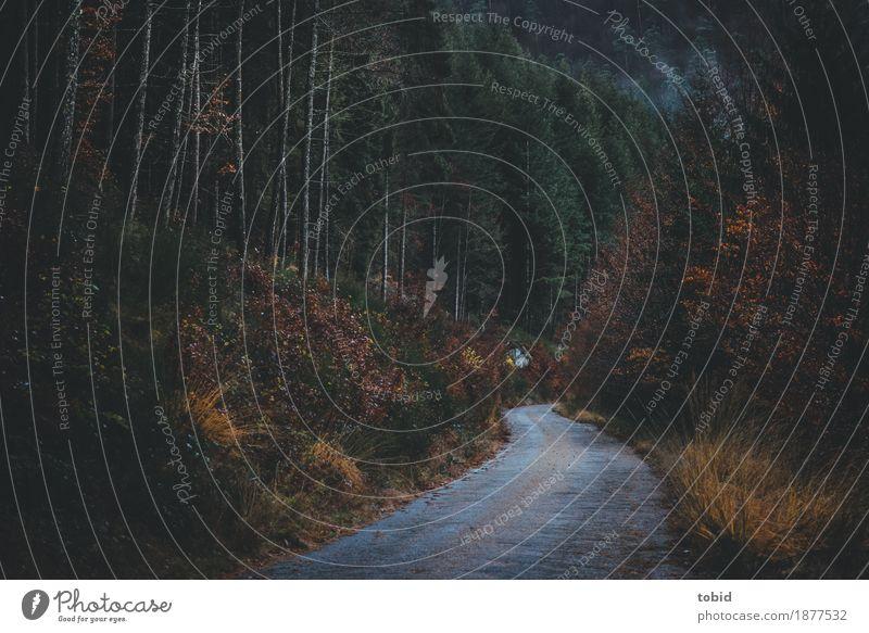 herbstlich Natur Pflanze Baum Landschaft Einsamkeit Wolken dunkel Wald Straße Wege & Pfade Herbst Gras Nebel Sträucher bedrohlich Hügel