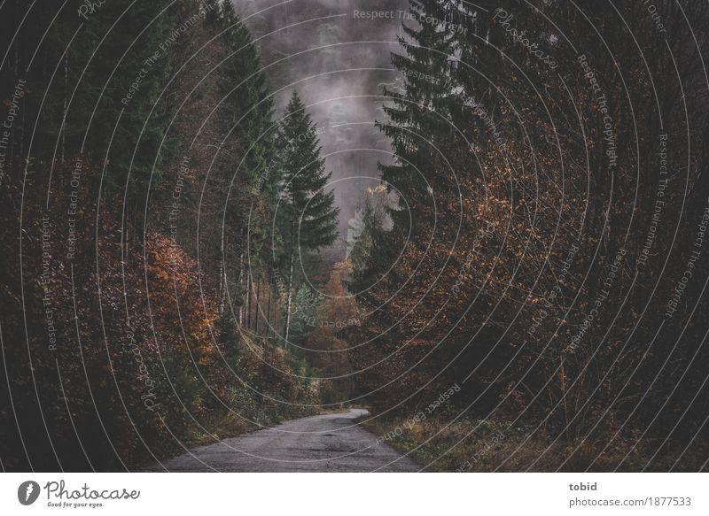 herbstlich #2 Natur Landschaft Pflanze Wolken Herbst Winter schlechtes Wetter Nebel Baum Gras Sträucher Moos Hügel Straße Wege & Pfade bedrohlich dunkel kalt