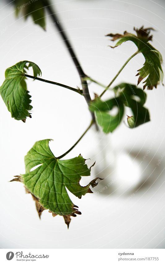 Welken Natur grün schön ruhig Erholung Tod Leben Freiheit Stil Gesundheit Zeit elegant ästhetisch Wachstum Dekoration & Verzierung Wandel & Veränderung