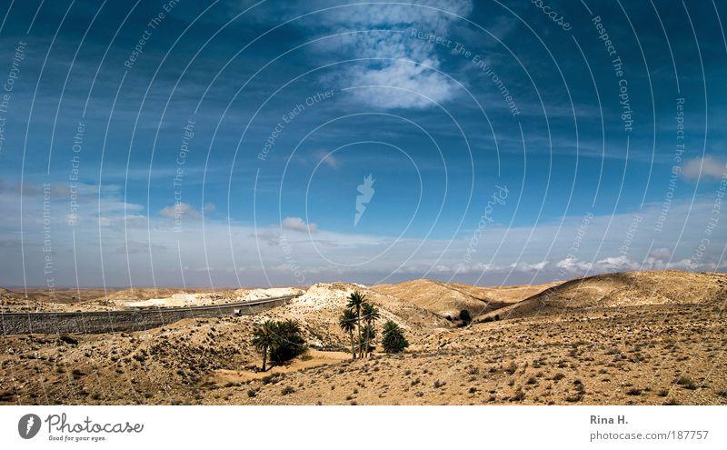 Seit wann wachsen auf dem Mond Palmen ? Ferien & Urlaub & Reisen Tourismus Ferne Expedition Natur Landschaft Erde Himmel Hügel Wüste Oase Tunesien ästhetisch