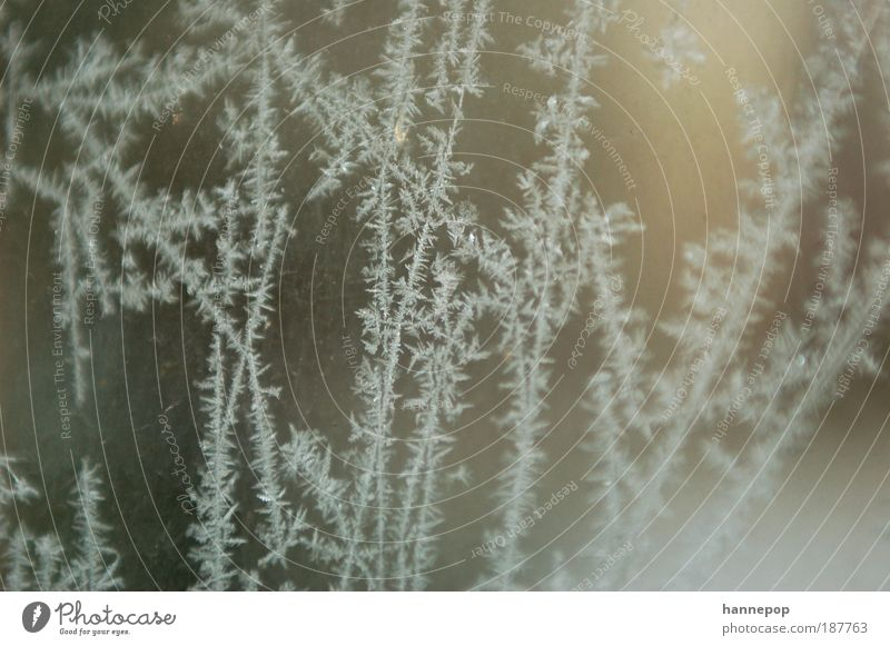 straßennetz Winter Schnee Wasser Klima Wetter Eis Frost frisch kalt Sauberkeit weiß Natur Kristalle Eisblumen Farbfoto Gedeckte Farben Außenaufnahme Nahaufnahme