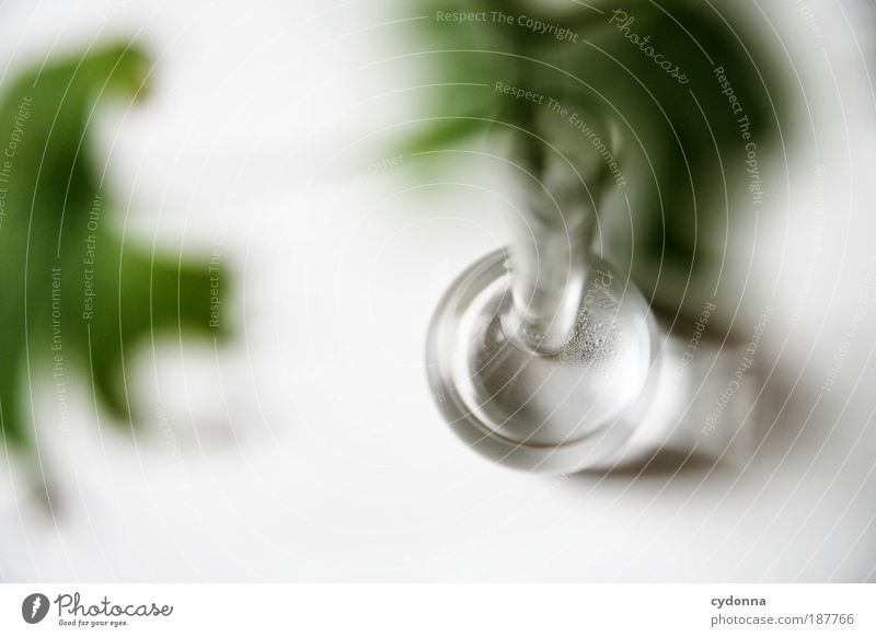 Vase Natur Wasser grün Blume Blatt ruhig Leben Stil Zeit Gesundheit elegant Design Wassertropfen ästhetisch Wachstum Perspektive