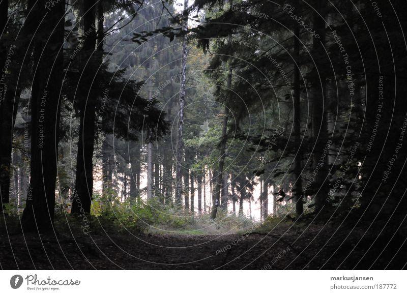Waldweg ruhig Ferien & Urlaub & Reisen Tourismus Ausflug Umwelt Natur Landschaft Pflanze Herbst Wege & Pfade Einsamkeit Erholung Farbfoto Außenaufnahme