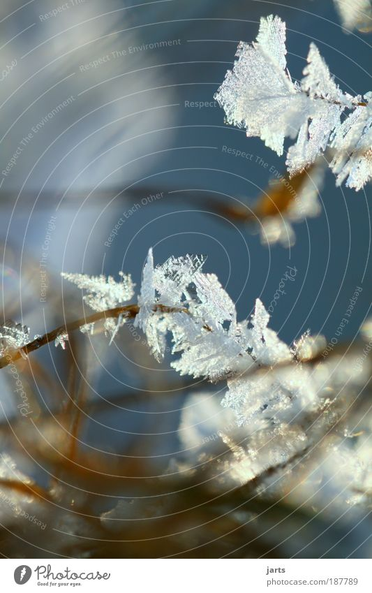 kein Sommerbild Natur Winter kalt Schnee Wiese Gras Eis Frost Makroaufnahme Schönes Wetter Eisblumen