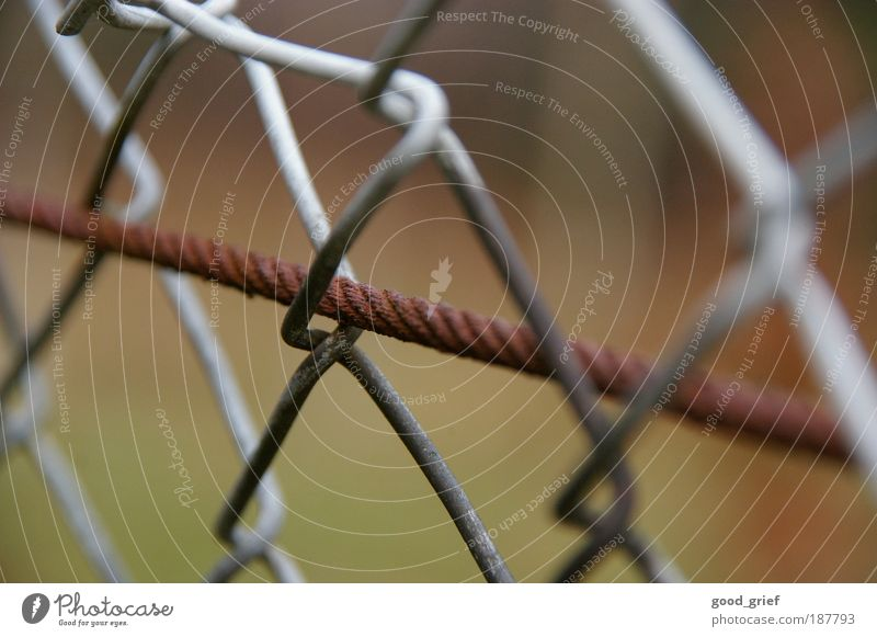 in der freiheit gefangen Natur Herbst Wiese Garten Freiheit grau braun Metall Umwelt Stahl Rost Draht Knoten Justizvollzugsanstalt Zaun