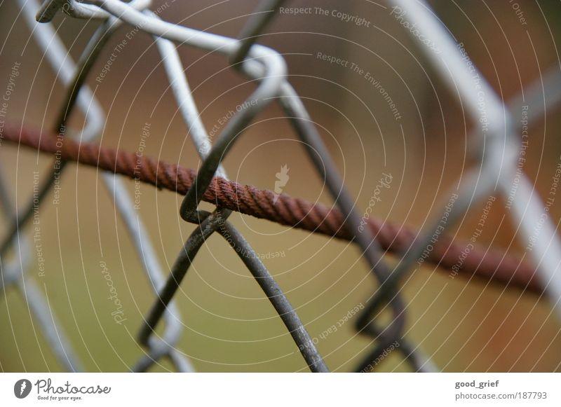in der freiheit gefangen Umwelt Natur Herbst Garten Wiese Metall Knoten braun grau Draht Drahtseil Maschendrahtzaun Schlaufe Rost Stahl eingezäunt
