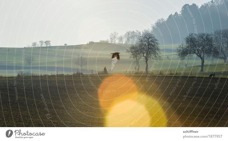 Prima Klima   Sonnenloch Umwelt Natur Landschaft Pflanze Tier Sonnenlicht Winter Schönes Wetter Baum Wiese Feld Wald Hügel Hund Vogel fliegen