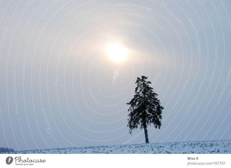 Single Winterurlaub Umwelt Natur Himmel Wolken Sonne Klima Wetter schlechtes Wetter Nebel Eis Frost Schnee Baum dunkel gruselig kalt Einsamkeit Farbfoto