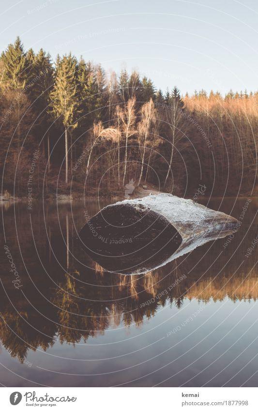 Morgens am kalten See ruhig Abenteuer Freiheit Umwelt Natur Landschaft Wasser Wolkenloser Himmel Sonnenlicht Herbst Schönes Wetter Eis Frost Baum Baumstumpf