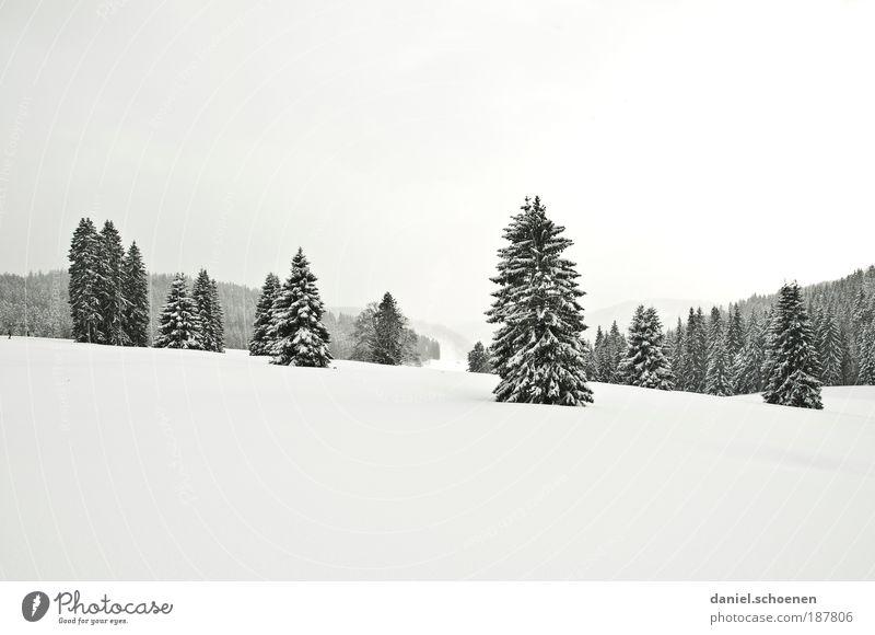 weiße Weihnachten für euch alle !!!! Natur Winter Ferien & Urlaub & Reisen Ferne Wald Schnee Landschaft Eis hell Frost Tourismus Tanne Baum Schwarzwald