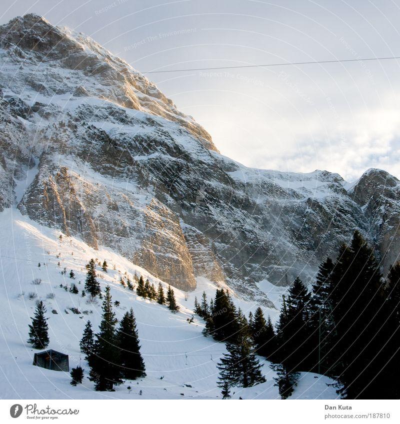 Weihnachtsbaumgrenze Natur Urelemente Himmel Wolken Winter Wetter Nebel Eis Frost Schnee Berge u. Gebirge Berg Säntis Gipfel Schneebedeckte Gipfel träumen kalt