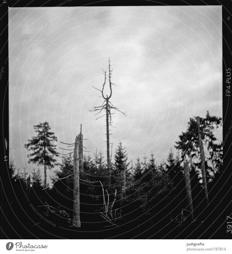 Brocken Umwelt Natur Landschaft Pflanze Himmel Baum Wald Berge u. Gebirge dehydrieren Wachstum Tod Umweltverschmutzung Wandel & Veränderung Harz Baumsterben