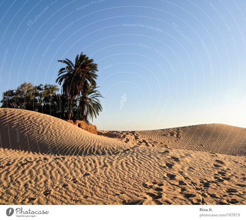 Spurensuche exotisch Ferien & Urlaub & Reisen Ausflug Ferne Safari Expedition Sonne Natur Landschaft Wolkenloser Himmel Wüste Oase Tunesien gehen