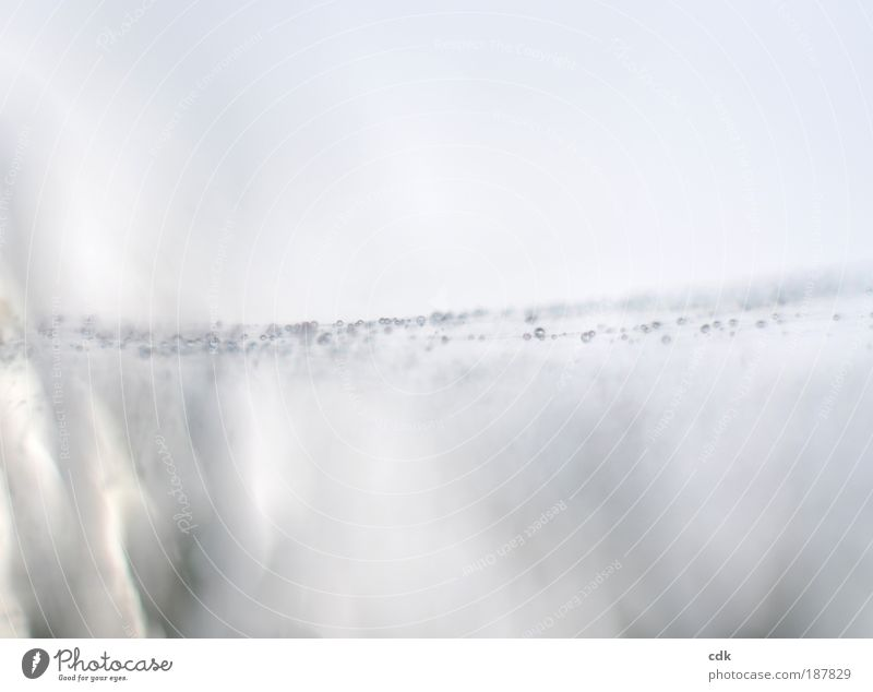 dazwischen Natur schön Winter Umwelt Bewegung träumen Stimmung Park Linie Eis Nebel glänzend Wassertropfen Klima authentisch Frost