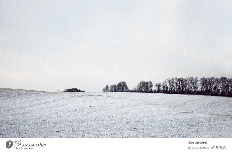 Winter Natur Himmel weiß Baum schwarz Wolken Ferne Wald kalt Schnee grau Landschaft Luft Linie hell