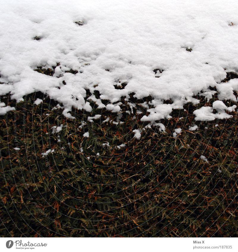 Berg Umwelt Winter Wetter schlechtes Wetter Eis Frost Schnee Pflanze Baum Sträucher Blatt Park kalt nass grün weiß Hecke Buchsbaum Farbfoto Gedeckte Farben