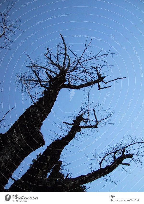 baum Baum Sommer Himmel Ecke