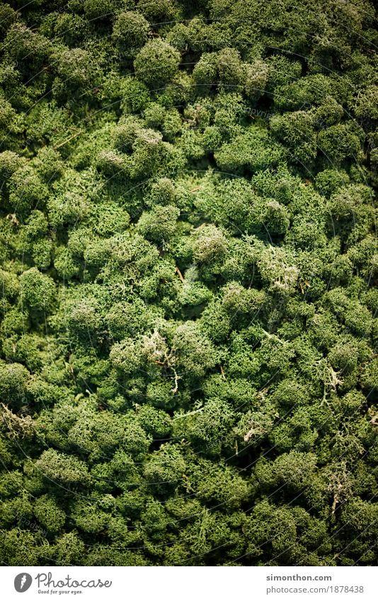 Regenwald Natur Ferien & Urlaub & Reisen Pflanze Baum Landschaft Tier ruhig Wald Umwelt Freiheit Tourismus Zufriedenheit Idylle Perspektive Klima