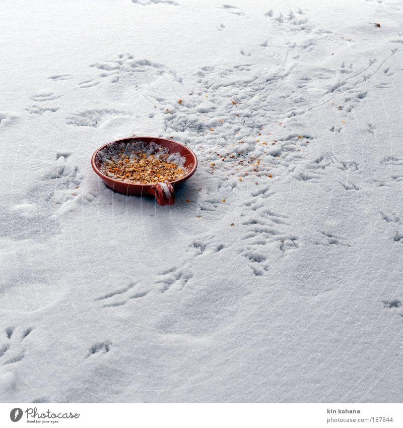 völlerei Getreide Ernährung Schalen & Schüsseln Winter Eis Frost Schnee Wildtier Vogel Fährte Tiergruppe Fußspur fliegen Fressen frieren füttern