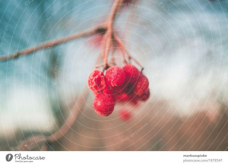 Eiskristall Morgentau Freizeit & Hobby Ferien & Urlaub & Reisen Winter Schnee wandern Garten Umwelt Natur Sonnenaufgang Sonnenuntergang Wetter Frost Pflanze