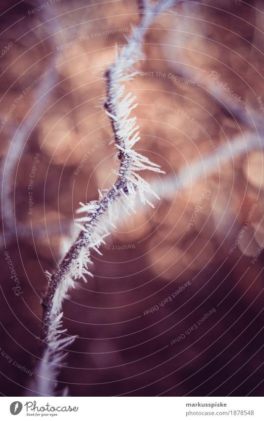 Eiskristall Morgentau Umwelt Natur Pflanze Tier Sonnenaufgang Sonnenuntergang Winter Klima Frost Baum Blume Grünpflanze Ast Zweig Kristalle Kristallstrukturen