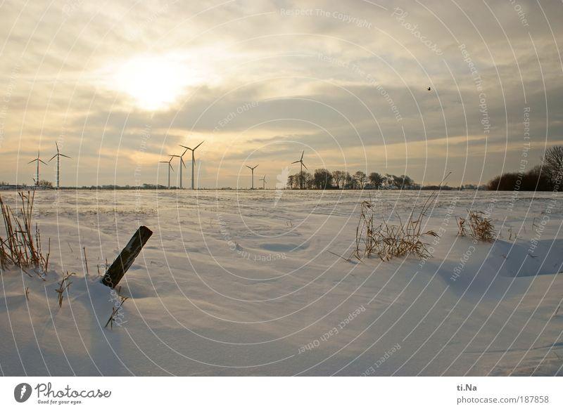 weiße Weihnacht Umwelt Natur Landschaft Pflanze Luft Wasser Winter Schönes Wetter Eis Frost Schnee Feld Dithmarschen frieren Farbfoto Außenaufnahme