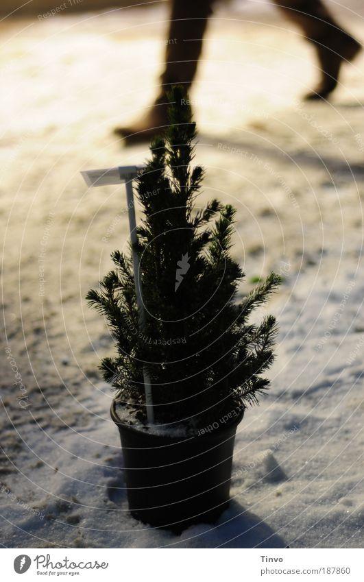 klein - aber dein könnt ich sein! Natur Winter Schnee gehen warten Optimismus Hoffnung kalt Weihnachtsbaum Stiefel Bürgersteig verschneit geduldig Licht