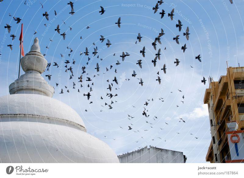 Schwärmerei Kenia Architektur Tempel Wand Dach Vogel Flügel Schwarm Bewegung exotisch frei Stimmung Zusammensein Gelassenheit Leben Idylle Umwelt Flugbahn