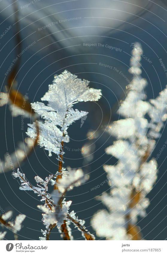 Frost Natur Pflanze Winter ruhig kalt Schnee Wiese Gras Eis Frost Klima natürlich Eisblumen