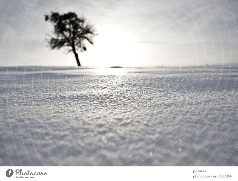 Schnee! Baum Winter Freiheit Wetter Klima Schönes Wetter Winterurlaub High Key